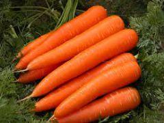 Carrot 04876
