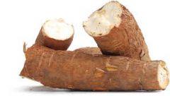 Cassava-8448